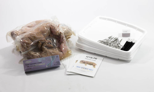 Classroom Large Fetal Pig Dissection Kit
