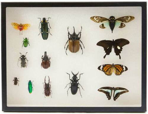"Insect Exhibit Case 12"" x 16"""