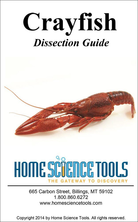 crayfish dissection guide. Black Bedroom Furniture Sets. Home Design Ideas