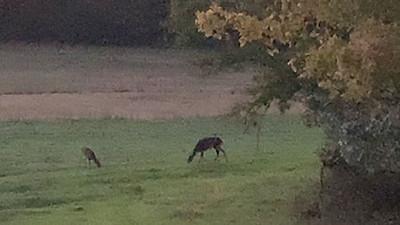 Hayden's First Hunt