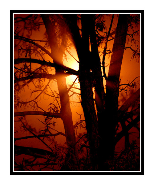 Tree in Orange Fog in Colorado Springs, Colorado 1646