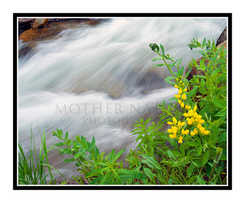 Wildflowers and Waterfall in Rocky Mountain National Park, Colorado 1774