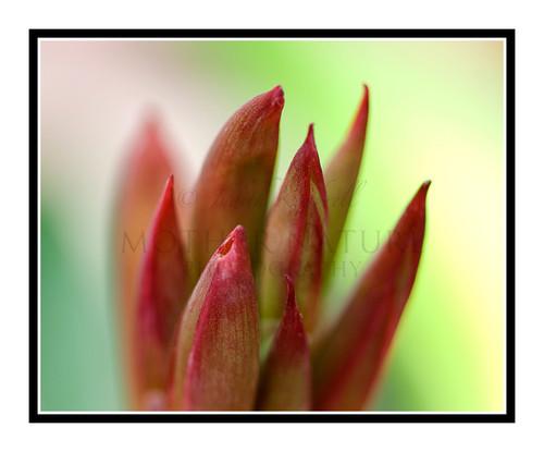 Red Spike Flower Detail 1717