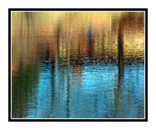 Tree Reflection in a Pond at Red Rock Canyon, Colorado Springs, CO 1285