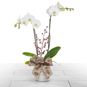 Modern Holiday Orchid