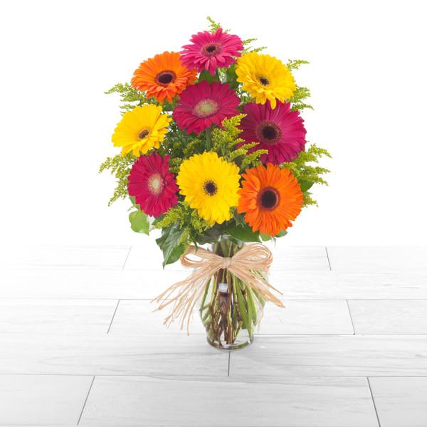 Cheery Gerbera   bright, pastel or warm