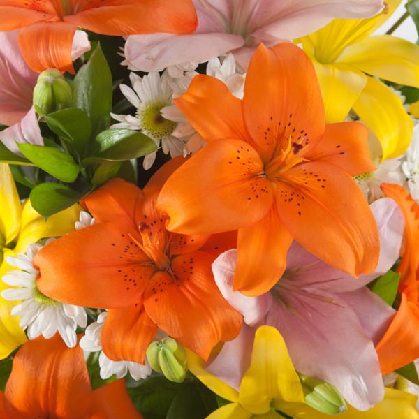 Kaleidoscope of Lilies