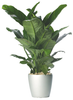 Peace Lily Plant ~ Your Way!~