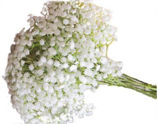 Babys breath 10 stems bunch white soderbergs floral and gift mightylinksfo