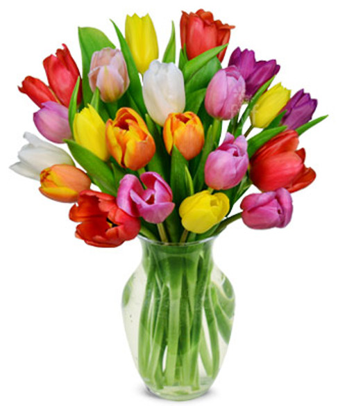 Tulips Your Way!