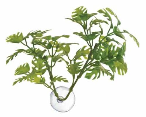Zoo Med Window Leaf Betta Plant