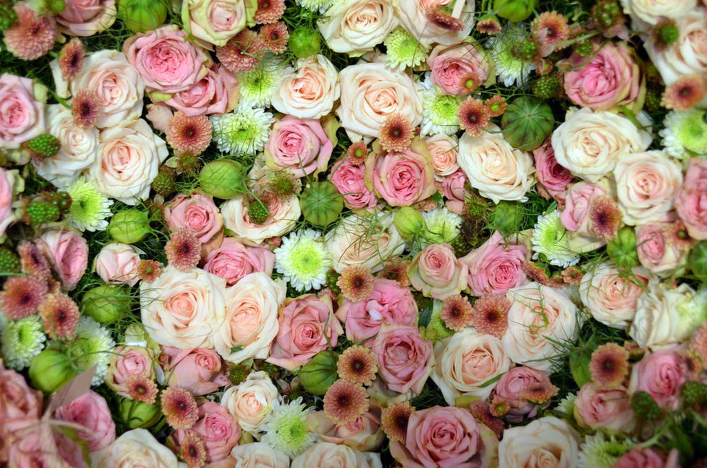 A soft elegant garden rose.