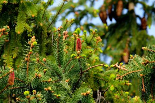 A fresh woodland fragrance.