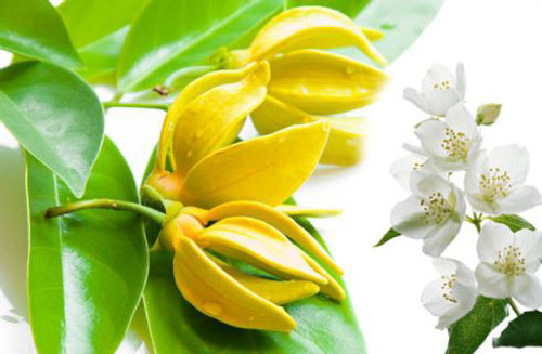 An essential oil that is rumoured to cure depression, the fragrance is musky and strong.