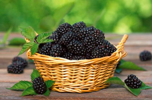 The aroma of blackberry jam, freshly made from the harvest. This scent suggests the countryside and sweetness.