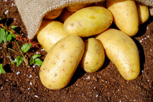 The fresh smell of raw potatoes.