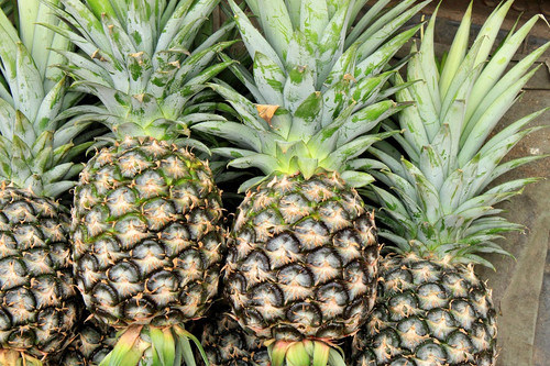 The sweet and juicy scent of freshly cut pineapple. A tropical and lush aroma.