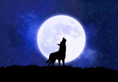 Werewolf - Aroma Oil