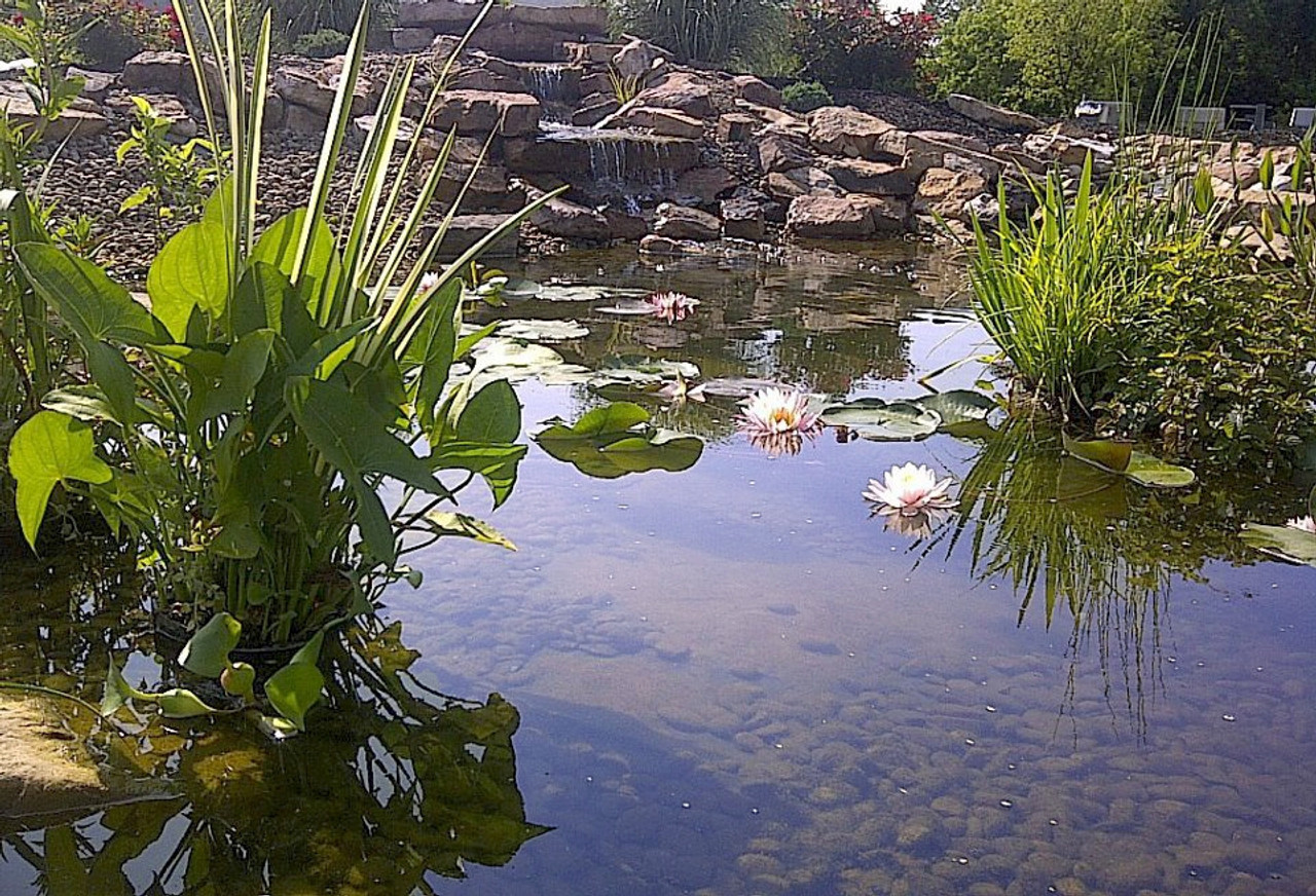 Premium pond package large garden pond for Garden pool chemicals