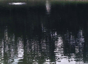 Reflective Black Dyed Pond Water