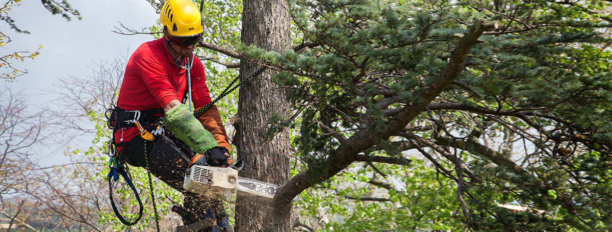 tree-care1-boris-dufour.jpg