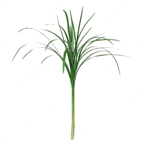 Lily Grass