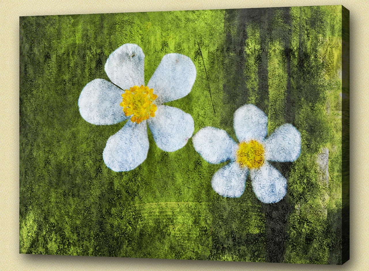 Buy white flowers with green background by community artists group flowerflorals flowering plants plantae mightylinksfo