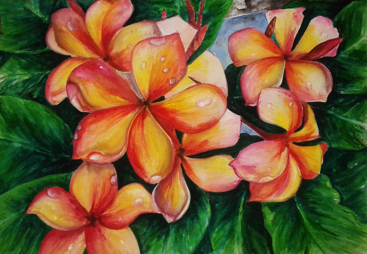 Buy beautiful water colour pulmeria flower painting handmade flower pulmeriabeautiful water colour pulmeria flower paintingart129211962artist izmirmasajfo