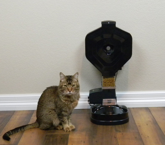 feeder super review cat csf full automatic