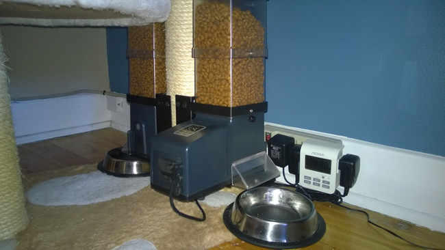never cat again best your para feeder automatic starve closing csf