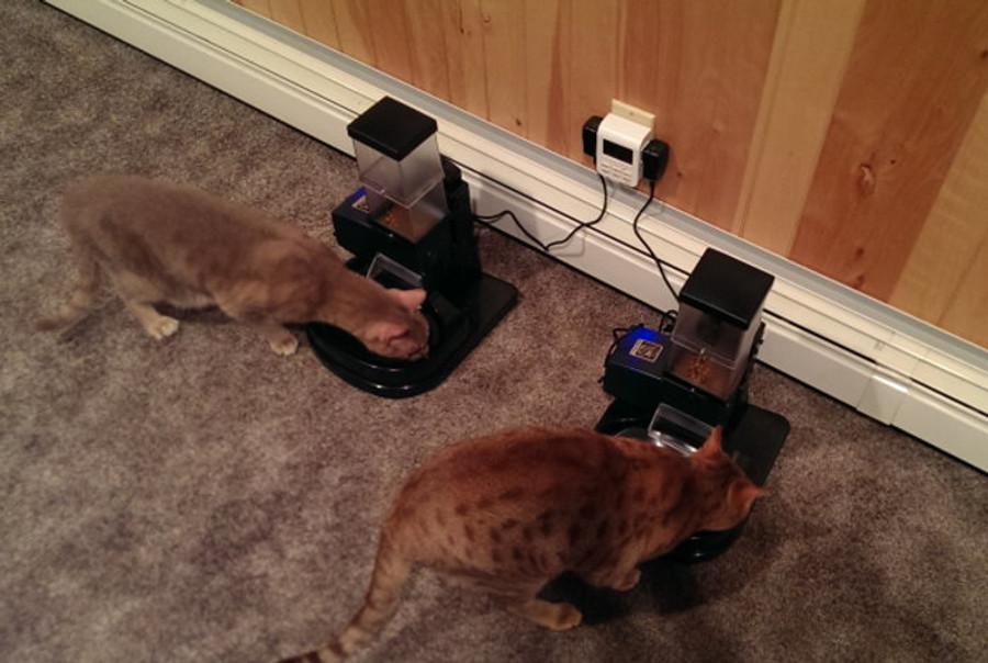 Double feeder set-up