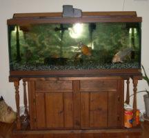 fishtank600-550.2.jpg