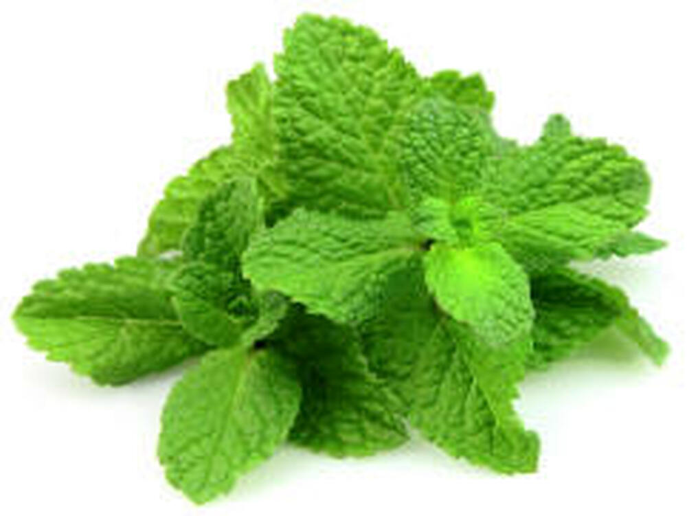 Peppermint Supreme Essential Oil