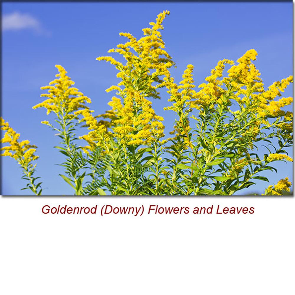 Goldenrod (Downy) Organic Essential Oil -5 ml
