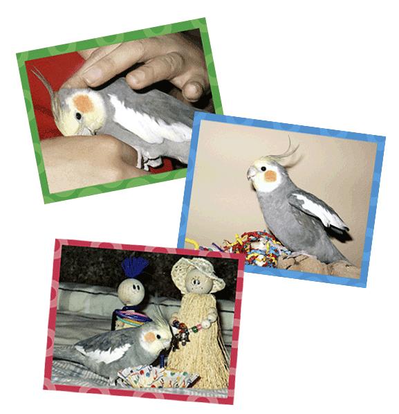 Molly of Molly's Bird Toys