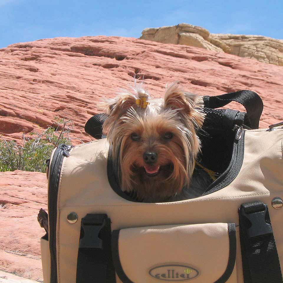 Backing a Yorkie for a hike using Celltei Pet Carrier