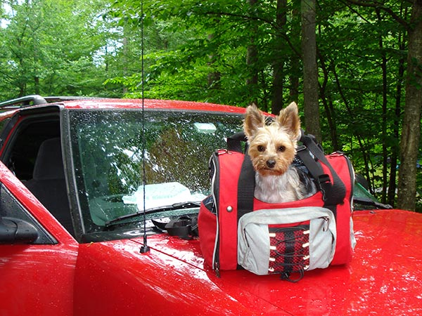 Taking a small Yorkie Camping with Celltei Backpack-o-pet