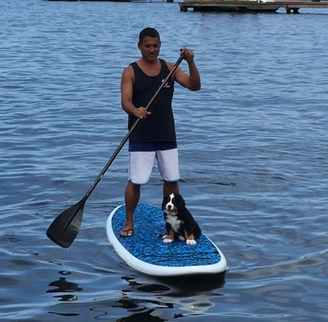 Bernese Mountain Puppy on paddle board with man