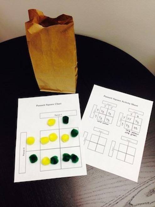pompom Punnett squares kit