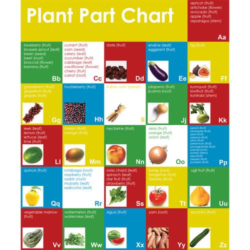 plant part chart