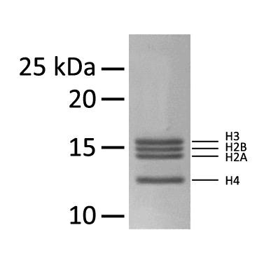16-4101 Protein Gel