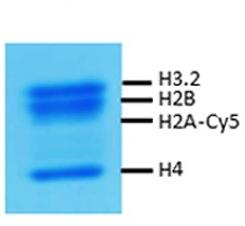 16-4201 Protein Gel