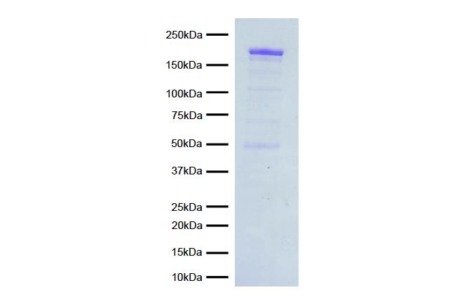 15-1014 Protein Gel Data