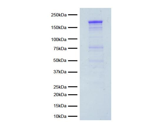 15-1015 Protein Gel Data