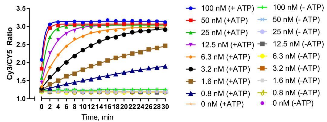 15-1013 ATP-dependent Chromatin Remodeling