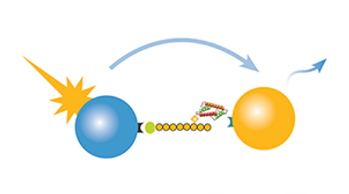 dCypher, novel chromatin binding interactions service