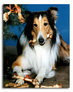 (SS3569995)  Lassie Television Photo