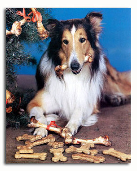 (SS3237520)  Lassie Television Photo