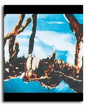 (SS3288038)  Tarantula Television Photo