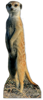 Meerkat Lifesize Cardboard Cutout / Standee